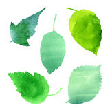 Vector set of green leaves Royalty Free Stock Images