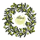 Vector set of hair care ingredients. Organic hand drawn colored elements. Green Olive wreath. Royalty Free Stock Photos