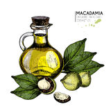Vector set of hair care ingredients. Organic hand drawn colored elements.Macadamia nuts, and oil bottle. Stock Photo