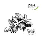 Vector set of hair care ingredients. Organic hand drawn elements. Argan nut with oil and branch. Stock Images