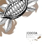 Vector set of hair care ingredients. Organic hand drawn elements. Cocoa bean. Stock Photography