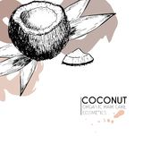 Vector set of hair care ingredients. Organic hand drawn elements. Coconut and leaves. Stock Image