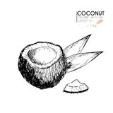 Vector set of hair care ingredients. Organic hand drawn elements. Coconut, slices and leaves. Royalty Free Stock Photography