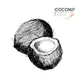 Vector set of hair care ingredients. Organic hand drawn elements. Coconuts. Stock Photo