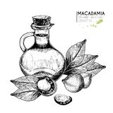 Vector set hair care ingredients. Organic hand drawn elements. Macadamia nuts, leaves, bottle oil. Stock Photo