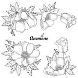 Vector set of hand drawing outline Anemone flower or Windflower, bud and leaf in black isolated on white background. Ornate contour Anemones for spring or royalty free illustration