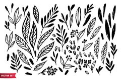 Vector set of hand drawing wild plants, herbs and berries, monochrome artistic botanical illustration, isolated floral. Vector set of hand drawing wild plants vector illustration