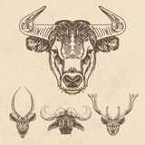 Vector set of hand drawn animal. Vintage Royalty Free Stock Photography