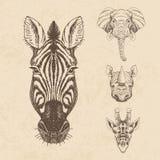 Vector set of hand drawn animal. Vintage Stock Photo