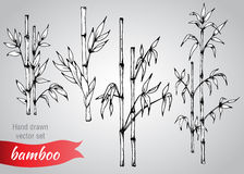Vector set of hand drawn bamboo branches Stock Image
