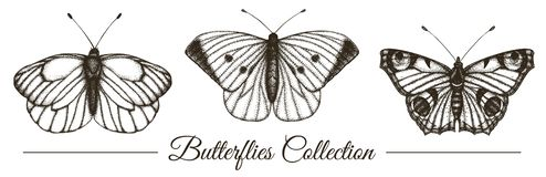 Vector set of hand drawn black and white butterflies vector illustration
