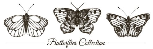 Vector set of hand drawn black and white butterflies stock illustration