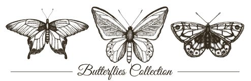 Vector set of hand drawn black and white butterflies. vector illustration