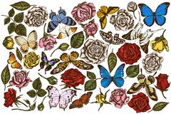 Vector set of hand drawn colored menelaus blue morpho, giant swordtail, blue morpho, lemon butterfly, red lacewing