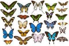 Vector set of hand drawn colored papilio ulysses, morpho menelaus, graphium androcles, morpho rhetenor cacica, papilio