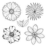 Vector set of hand drawn colorless flowers and leaf branch. Black white illustration isolated on white. Stock Photography