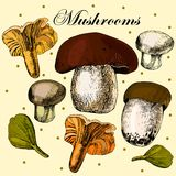 Vector set of hand drawn edible mushrooms Royalty Free Stock Photo
