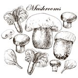 Vector set of hand drawn edible mushrooms Royalty Free Stock Images