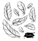 Vector set of hand drawn feather. Ink vintage illustration Stock Image