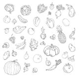 Vector set of hand drawn fruits and vegetables vector illustration