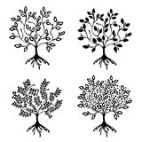 Vector set of hand drawn illustration, decorative ornamental stylized tree. Black and white graphic illustration isolated on the w Stock Photos
