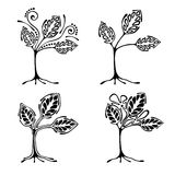 Vector set of hand drawn illustration, decorative ornamental stylized tree. Black and white graphic illustration isolated on the w Royalty Free Stock Photos