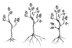 Vector set of hand drawn illustrations, decorative ornamental stylized tree. Graphic illustrations, black and white sketch. Decora Stock Photo