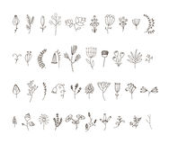 Vector set of 40 hand drawn line flowers and. Florals. Use for decoration, patterns or any design Stock Image