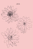 Vector set of hand drawn lotus flowers.  Royalty Free Stock Photos