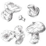 Vector set of hand drawn mushrooms Stock Photo