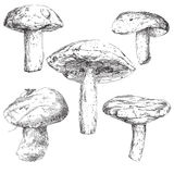 Vector set of hand drawn mushrooms Royalty Free Stock Photo