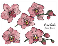 Vector set of hand drawn orchid branches with flowers. Stock Photo
