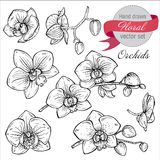 Vector set of hand drawn orchid branches with flowers. Stock Photography