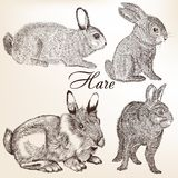 Vector set of hand drawn rabbits Royalty Free Stock Photos