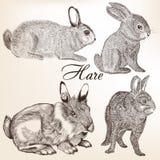 Vector set of hand drawn rabbits Royalty Free Stock Photos