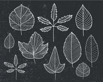 Vector set of hand drawn tree leaves - white on black background. Royalty Free Stock Image