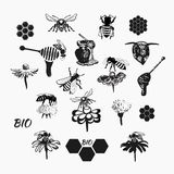 Vector set for honey sketches 4. Vector set for honey sketches. Abstract design of a bee Royalty Free Stock Image