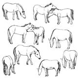 Vector set of horses Royalty Free Stock Photos