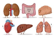 Vector set of human internal organs illustrations. Heart, lungs, kidneys, liver, brain, stomach. Smiling characters.