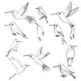 Vector set of hummingbirds Stock Photo