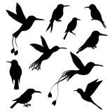 Vector set of hummingbirds silhouettes. Hand drawn songbirds, isolated vector elements Stock Photos