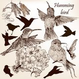 Vector set of hummingbirds in vintage style for design. Vector set of detailed hand drawn birds for design Royalty Free Stock Photography