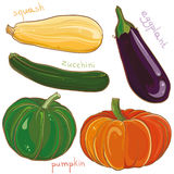 Vector set with illustration of eggplant, pumpkin, squash and zucchini Royalty Free Stock Image