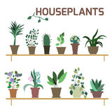Vector Set of indoor plants in pots. Royalty Free Stock Photography