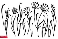 Vector set of ink drawing herbs, flowers, monochrome artistic botanical illustration, isolated floral elements, hand drawn. Illustration. Monochrome royalty free illustration