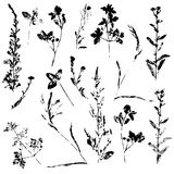 Vector set of ink stamp of herbs Stock Photos