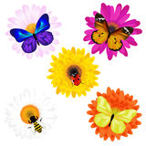 Vector Set Of Insects On Daisies. Vector Royalty Free Stock Image