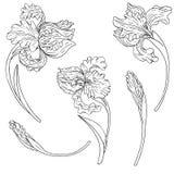 Vector set of irises Royalty Free Stock Photography