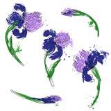 Vector set of irises Stock Photography