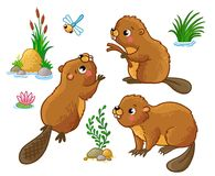 Vector set with isolated beavers in different poses. Royalty Free Stock Image